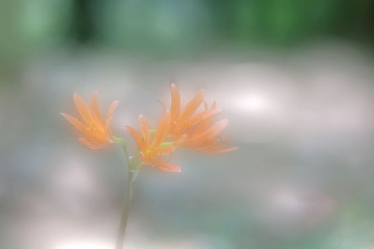 150808_2